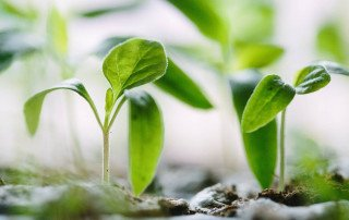 Plants growing for a brand strength concept